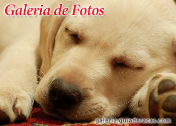 fotos de perritos - photo #38