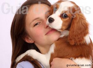 Busca de Filhotes - Criadores - Canil - Gatil