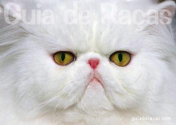 Loja de Gatos Persa
