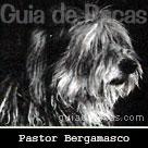 Pastor Bergamasco