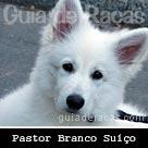 Pastor Branco Suíço