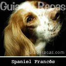Spaniel Francês